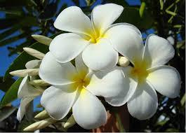Le Monoi De Tahiti Mains Du Coeur